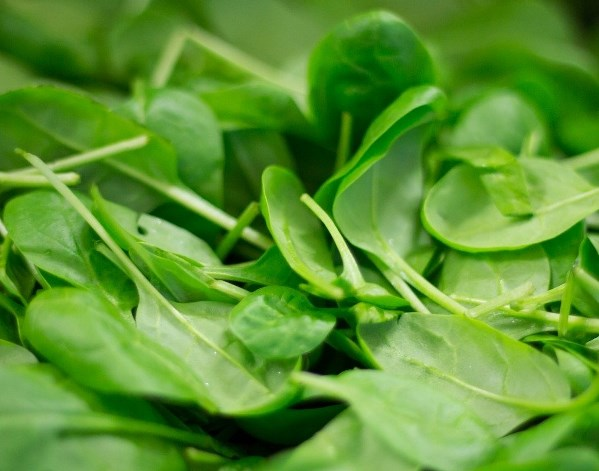 Spinach , immune boosting foods