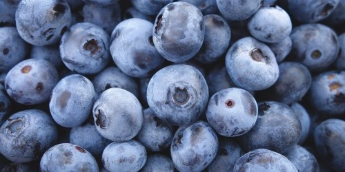 Blueberries, immune system booster